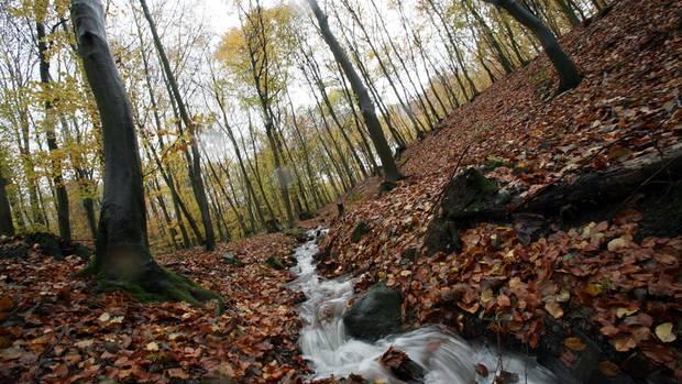Zwischen Alpen und Meer: Natur erleben: Das sind die sieben schönsten Wanderungen im Herbst