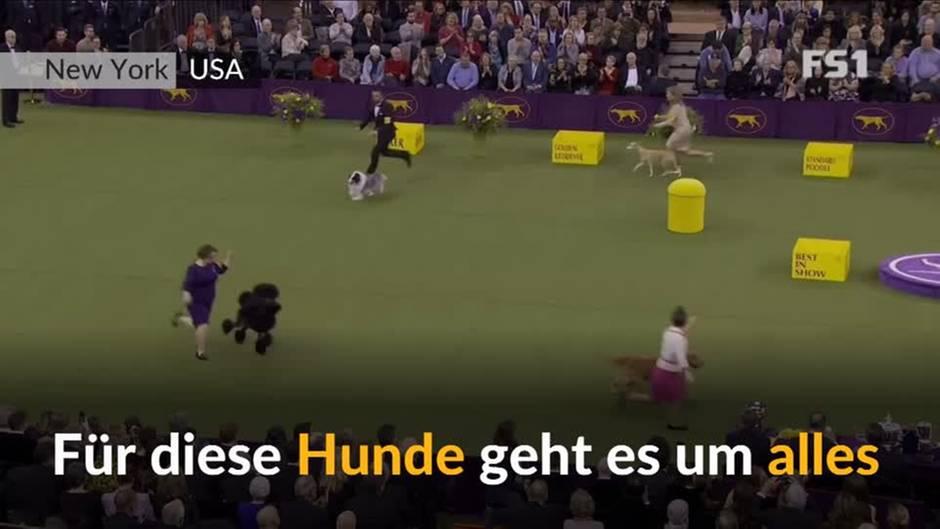Video: Der schönste Hund der Welt